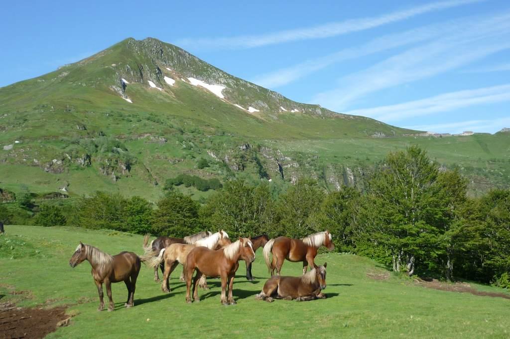 Des chevaux dans un pré verdoyant au pied du puy-Mary