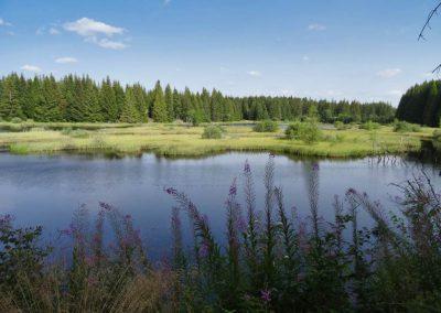 Un lac sauvage dans la pinatelle
